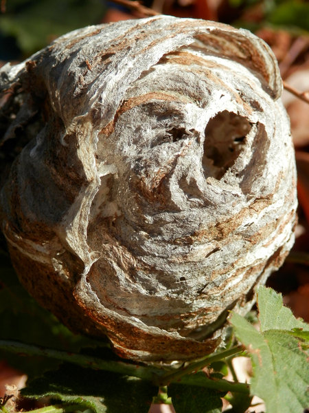 wasp nest: no description
