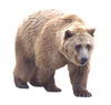 Bear: A brown bear.