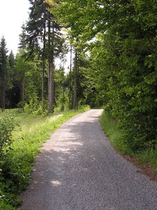 Forest road: A path leading through the forest on the Polish-Czech border.Please comment this shot or mail me if you found it useful. Just to let me know!I would be extremely happy to see the final work even if you think it is nothing special! For me it is (and for my