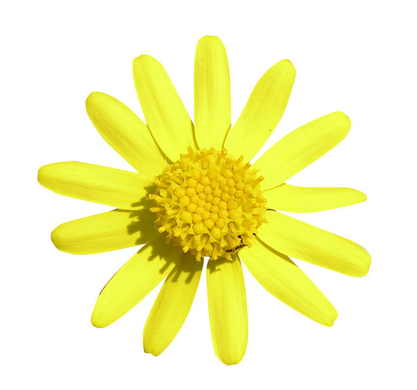 Yellow flower: A flower