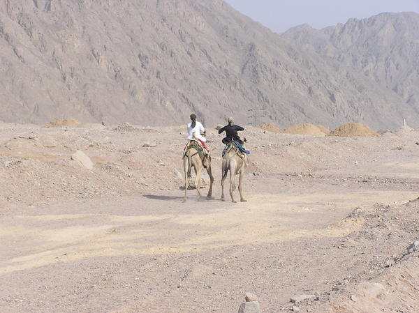 Camel riders: Camel riders on a desert. Sinai, Egypt