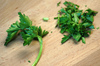 Fresh parsley: Fresh parsley on a cutting board