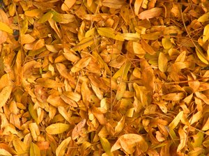 Autumn Foliage: Yellow leaves on the ground make a great background.