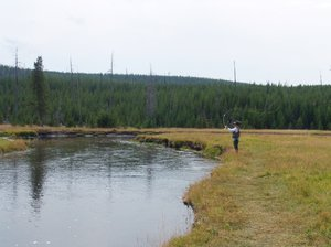Man Fly Fishing: Man fly fishing in Yellowstone National Park. This  is a catch and release area only.