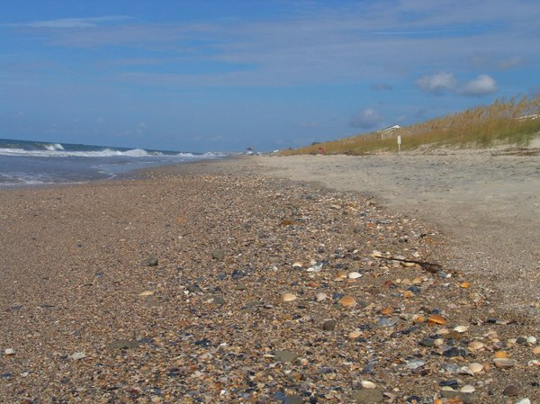 Ashore: Seashells washed ashore each day makes a great find on this Oak Island Beach in North Carolina USA - Summer