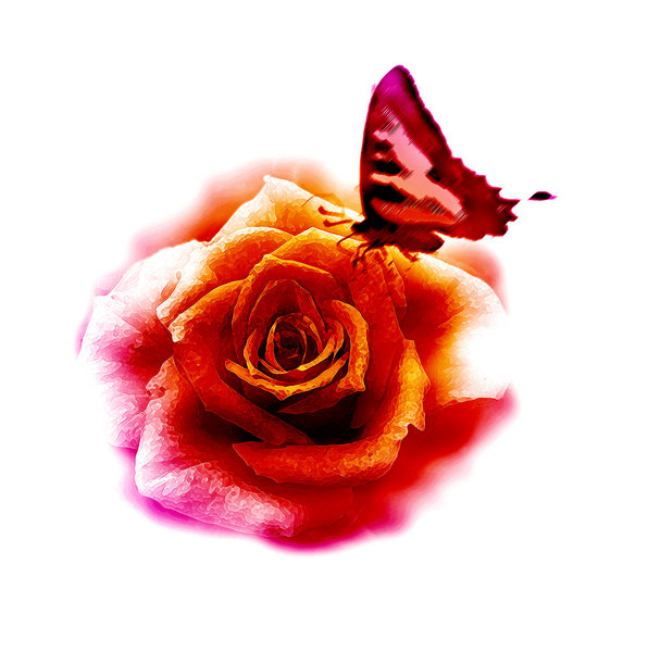rose and butterfly: rose and butterfly - graphic design