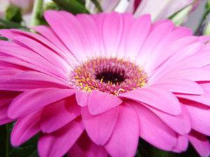 Shades of pink: Deep pink tones of flowers nestling in a bouquet.