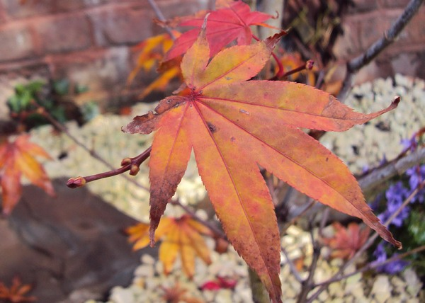 Autumn colours: Gorious gold, red, green, yellow coloured leaves