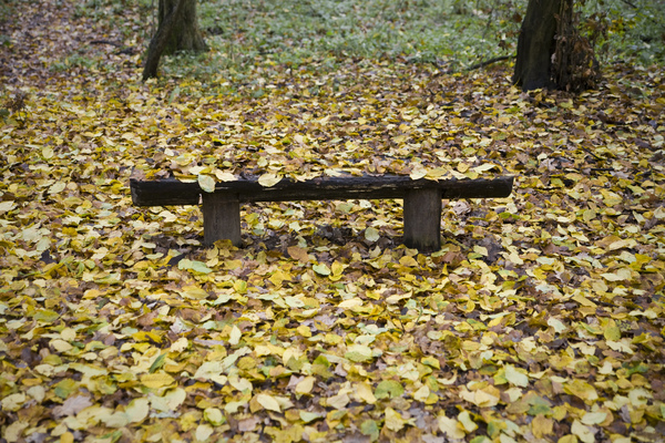 Bench in a park: Lonesome wooden bench. Enjoy.