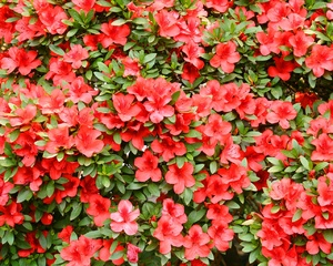 Floral background: The shot was taken in Humble Administrator's garden, Suzhou, province Anhoi, China