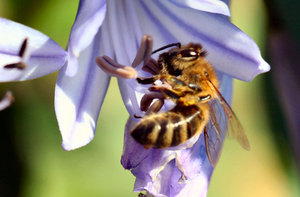 Bee Standing Upright: Bee standing in odd position