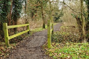Woodland path: Woodland path over bridge