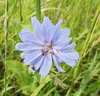 Blue flower: Blue flower with insects