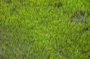 Marshland from above: Spring Marsh. Shot taken from above on a windy day.