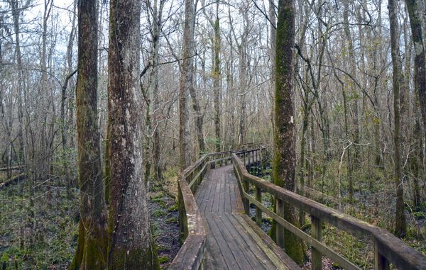 Woodland Path II: Dusk photo on a cold rainy day of a walk through a Cypress Swamp in South Carolina