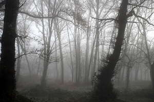 Foggy wood 5: Foggy wood