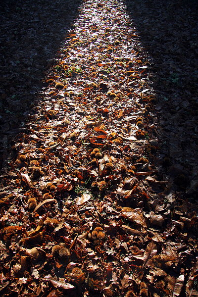 Autumnal light path 1: Autumnal light path