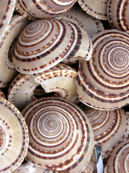 Overzeese shells 1: