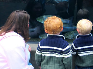 Field Trip: A trip to the Aquarium. Sharks, 'Gators, Fish - a plethora of sea creatures