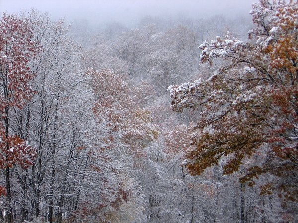 First Snow: Autumn is leaving, Winter with the snow is coming.