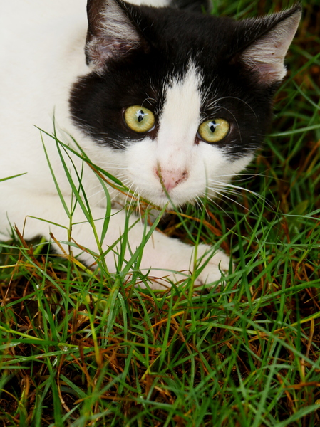 psipsina a playful cat: a playful cat and always looking for company,