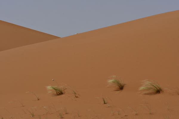 Desert Landscape: Desert Sand and small rocks are found in the large desert areas in Saudi Arabia and this red sands are found usually outside the main capital of Riyadh. Mostly just sand and sky are seen except some scattered green bushes