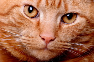 Cat close-up:
