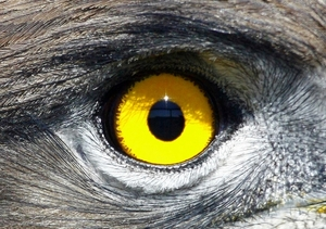 Eagle eye: Various close up pictures of some of the almost 80 South African eagles and birds of pray