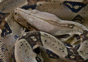 Snake_2: No description