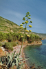Island Vis, Croatia: Beach on the island of Vis