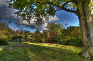 Autumn Scene 1: An arboretum in Kent in November. This image is HDR