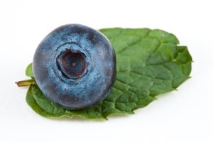 Blueberry & Mint: Blueberry close-up decorated with mint and isolated on a white background.