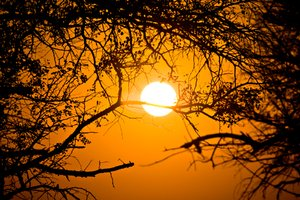 Forest Sunrise: Sunrise scenery from Kruger National Park, South Africa.