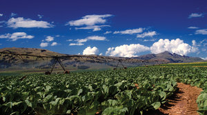 Farm Irrigation in the Drakens: Farm Irrigation in the southern Drakensberg town of Kokstad.