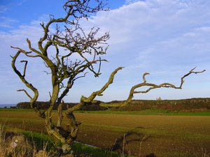 Gnarled Tree: Located on the Northumberland Coast, the harsh climate has carved this tree into the sculptural form that it is today. The dramatic ruins of Dunstanburgh Castle are framed in the background.