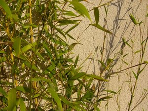 Garden Texture 1: Hard and soft landscape textures from my garden. This one is a potted bamboo.