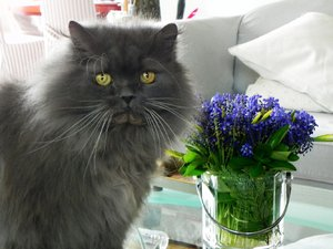 my persian cat: none