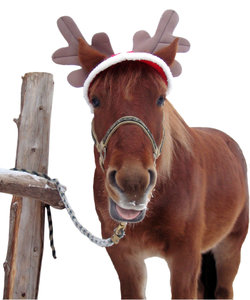 Christmas Horse 2 - isolation: Isolated version of Photo #673398.