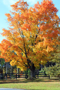 Autumn in Ontario 1: Fall Colours -- Stouffville, Ontario========================Please drop me a quick note if you find my pictures useful.Even if it's something small --I would be absolutely thrilled to know where & how they are being used!
