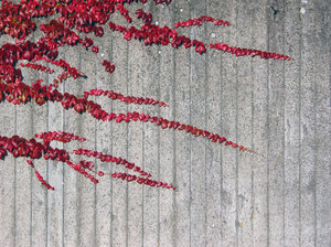 wall and plant texture: Striped concrete wall and plant at parking place in Lund, Sweden.