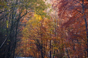 Autumn Woods: The forest around the Danube Bend on a sunny morning