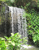over the edge: waterfall in jungle garden setting