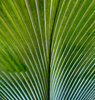 curved light & shadow lines: curves, light, lines, shadows on large palm leaves
