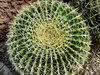 the sharp end: the sharp-ended spiny surface of the barrel cactus