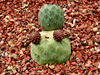 cacti & succulent gardens39: cacti and succulent varieties in specialised cactus garden