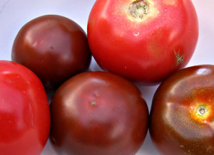 red and black tomatoes: several red and black tomatoes - kumatoes