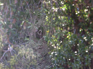 what webs we weave: spider webs
