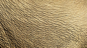 wrinkled1: abstract backgrounds, textures, patterns, geometric patterns, shapes and perspectives from elephant's hide