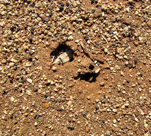 ant crater3: double entrance to arid area ants nest