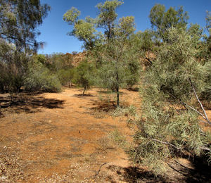 arid area1: dry bush country in central Australia